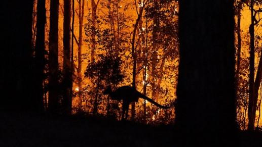 Από τις δασικές πυρκαγιές στην Αυστραλία. Διακρίνεται η φιγούρα ενός καγκουρο.